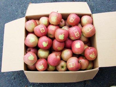 2009 11 20 apple 1 В Японии вырастили яблоки Apple